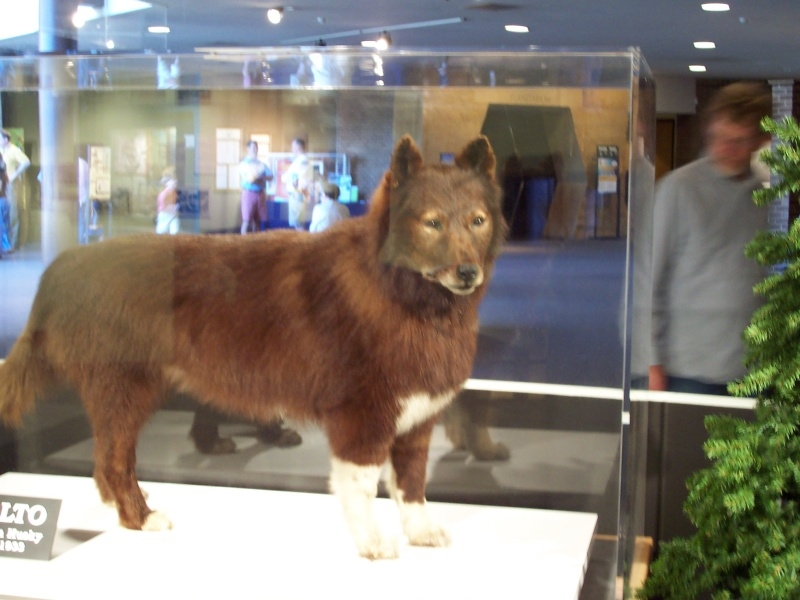 Natural History Of A Siberian Husky