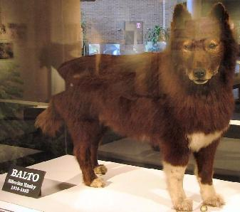 Real Balto Pictures