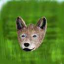 Wolf puppy colored :)