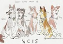 My canine version of the NCIS team