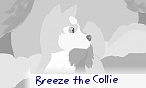 Breeze the Collie