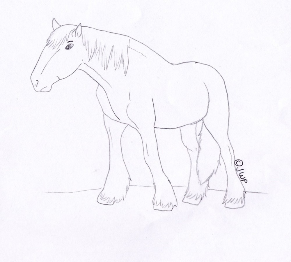 clydesdale coloring pages - photo#28