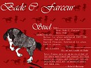 Bade C. Farceur up for stud