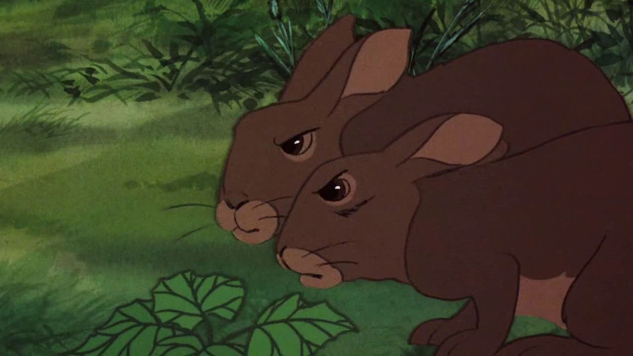 watership down Hazel, also known as hazel-rah, by the watership down rabbits, is a brave and intelligent buck, the main protagonist in watership down, and is also a character in tales from watership down.